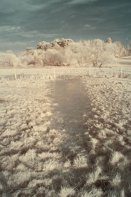 Photo of a frozen puddle in a field taken with a Hitech 720nm infrared resin filter