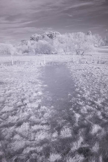 Photo of a frozen puddle in a field taken with a Lee #87 730nm infrared polyester filter
